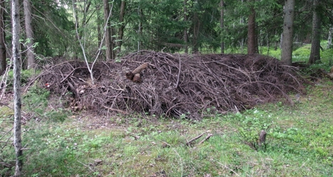 Hage avfall skog G M Strømeng-001