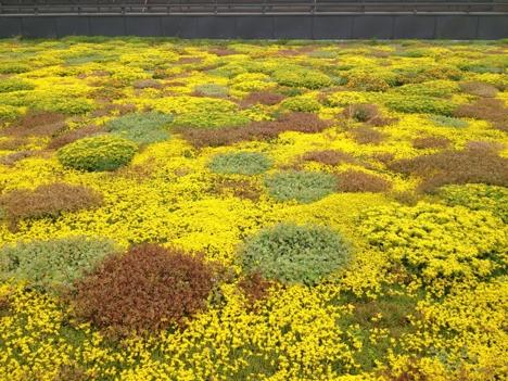 Grønne tak Veolia juni