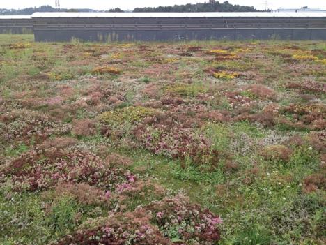 Grønne tak Veolia høst