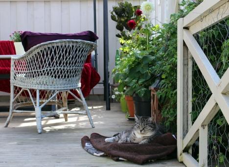1000 åpne hager med katt