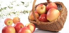 Epler bredde