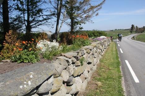Natursteinsmur med blomster