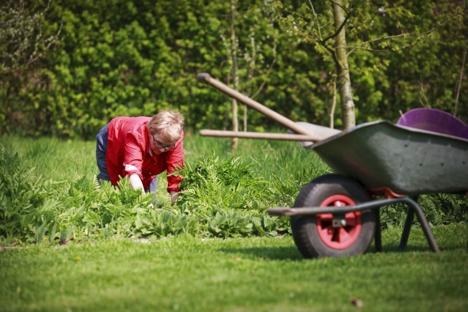 Kvinne luker i hagen