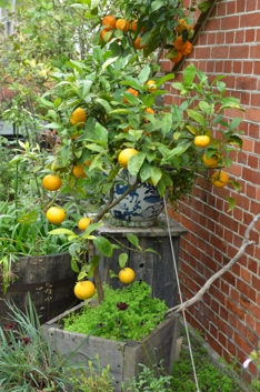 Høst i hagen_Foto Plantmania (3)