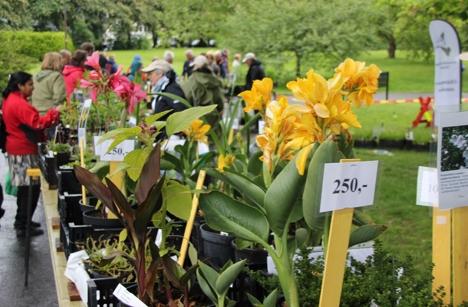 Botanis hage vårtreff 2012 bredde.jpg