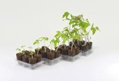 EasyToGrow dyrking i små potter