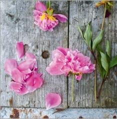 Barbeinthagen_blomster og drivved