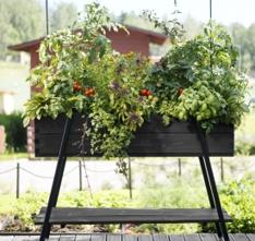 Hasselfors dyrkingsbenk crop