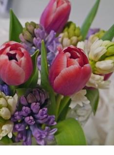 Bukett tulipaner og svibler